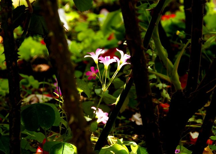 Garden Gardens Garden Flowers Garden_world Green Pink Color Pink Flowers Black Color Relax Relaxing View Relaxing Taking Photos Flower Head Beauty In Nature
