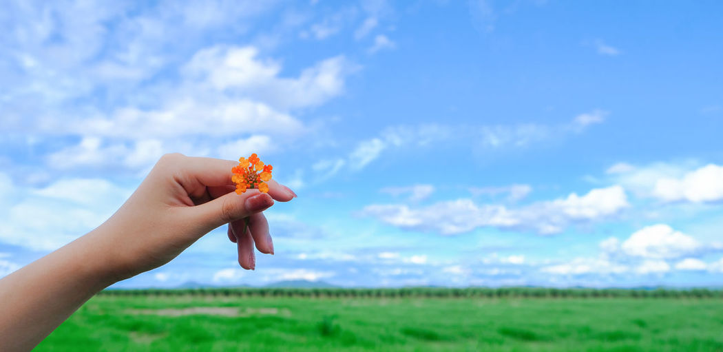 Hand holding plant on field against sky