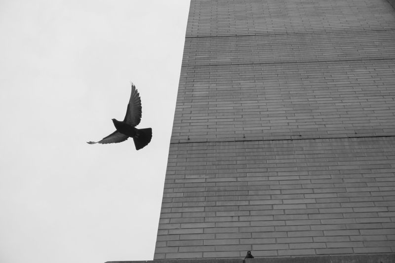 Architecture Building Exterior Built Structure Day Mid-air Flying Nature City Low Angle View Outdoors Full Length Sky Vertebrate Bird Leisure Activity