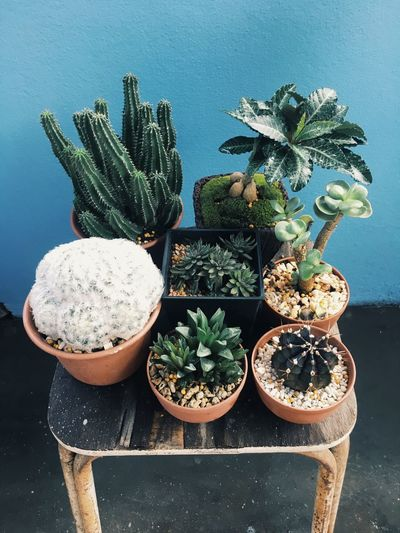 Wake up with Green world Gardening Jardin Cactuslover Cactus Potted Plant Table Plant Cactus No People Indoors  Growth Freshness Close-up Green Color