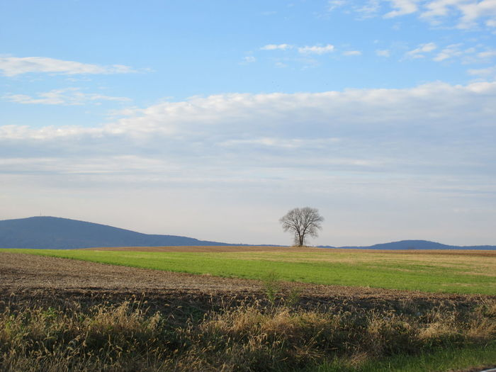Emptiness Autumn Freedom Tree Rural Scene Agriculture Field Sky Landscape Cloud - Sky Grass Single Tree
