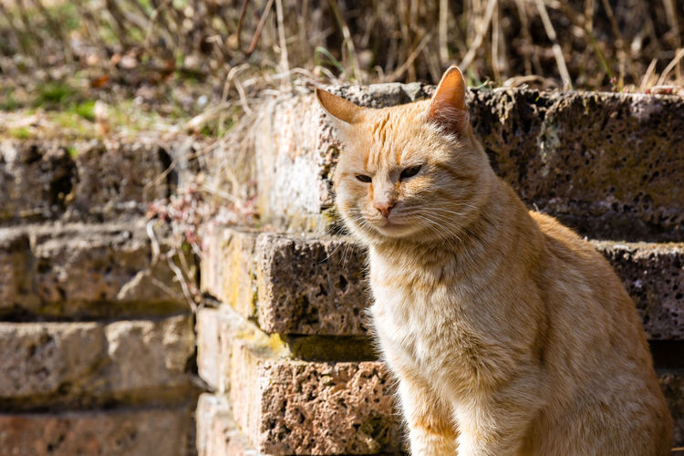 Animal Animal Themes Cat Close-up Colors Colours Domestic Animals Domestic Cat Feline Fur Outdoors Pets