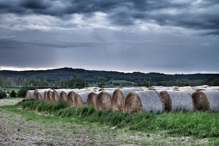 Close-up of hay bales on grassy field