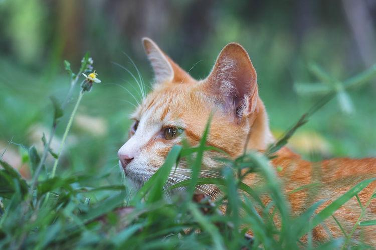 Animal Animal Themes Cat Day Grass Mammal One Animal Pets