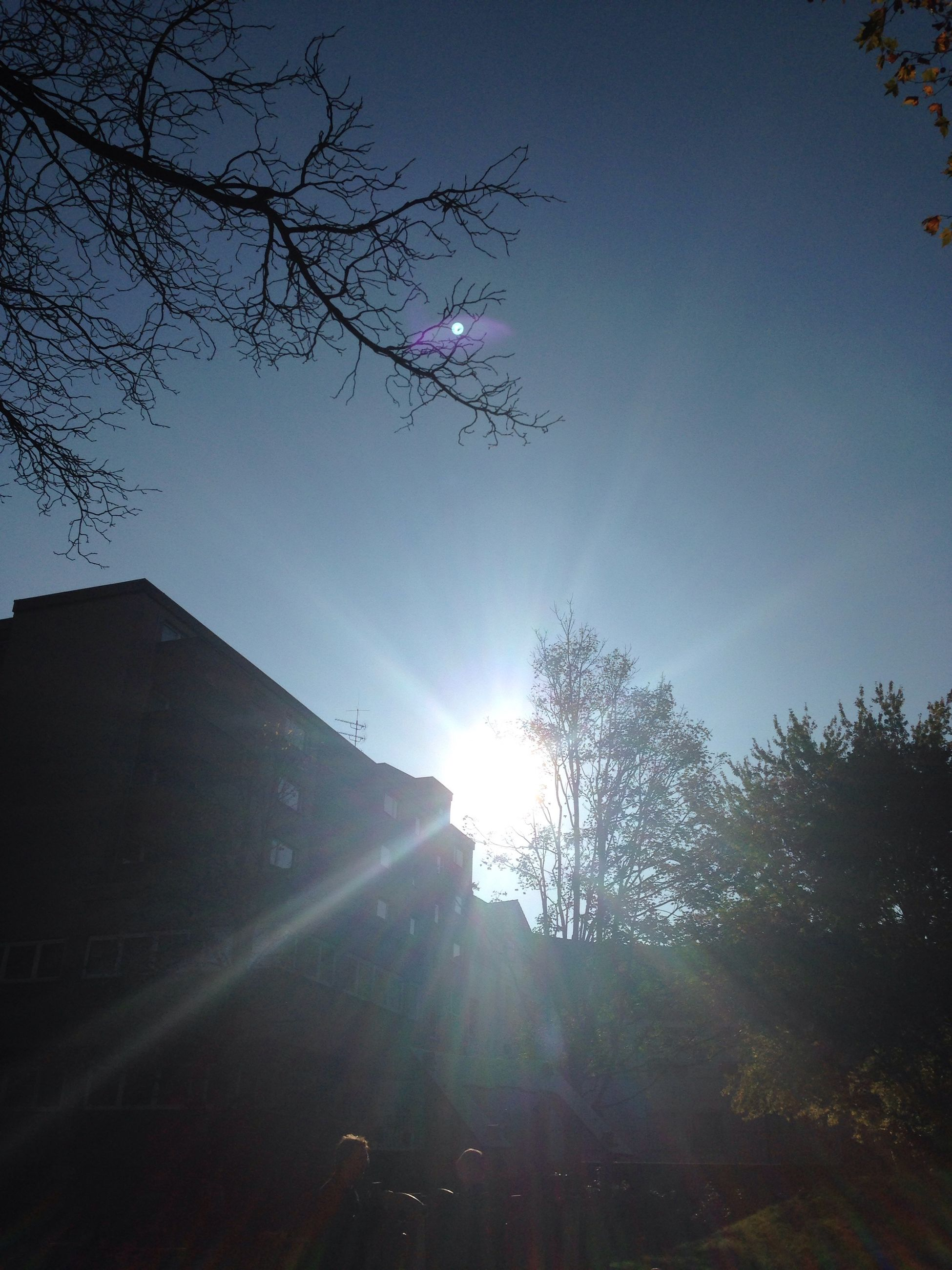 sun, low angle view, sunbeam, tree, lens flare, sunlight, silhouette, sky, clear sky, bright, blue, nature, branch, beauty in nature, sunny, tranquility, growth, day, back lit, outdoors