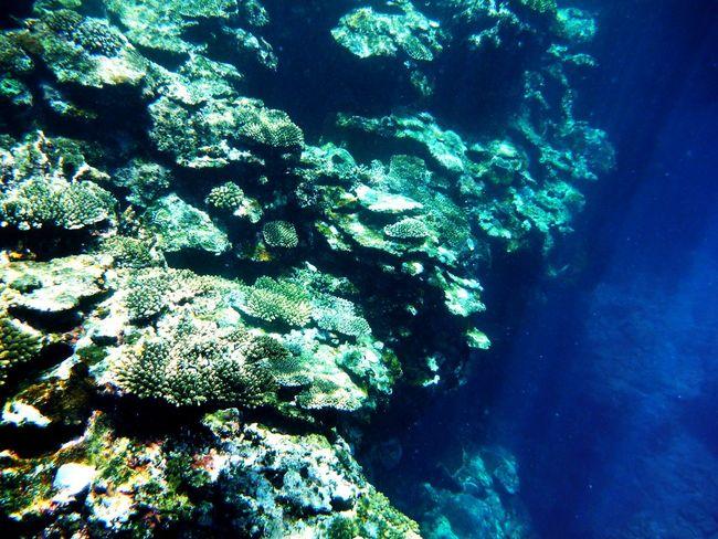 Life Is A Beach Beach Water Okinawa Aka Island Zamami Village Snorkeling Traveling Holiday