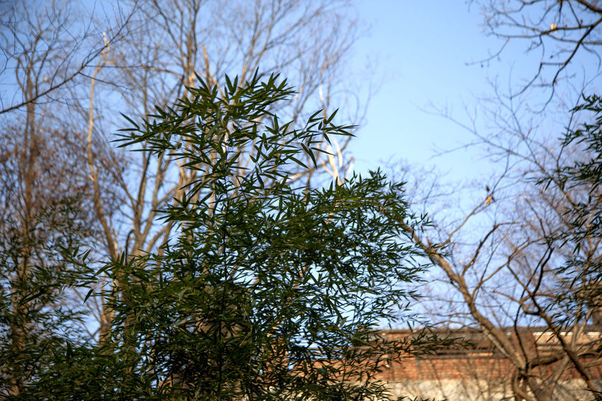 Bamboo Leaves Branch Change Day Forest Grass Green Green Color Growing Growth Lush Foliage Nature No People Outdoors Plant Silsangsa Tranquil Scene Tranquility Tree Tree Trunk Tropical Climate Winter