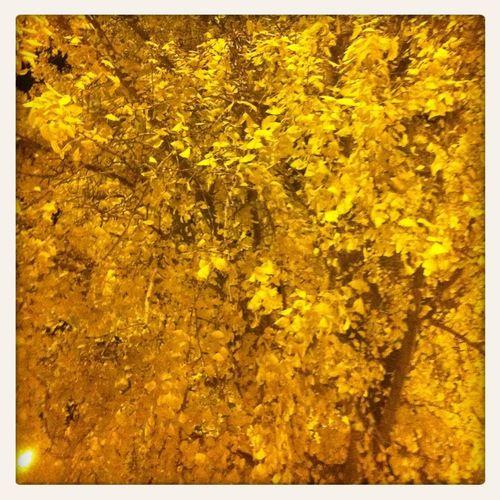 Il giallo.