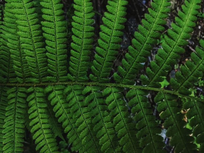 Green EyeEm Best Shots Taking Photos Taking Pictures Textured  Pattern Colorful Full Frame Tree Close-up Green Color Plant Leaf Vein Natural Pattern Leaf Leaves Growing Stay Out
