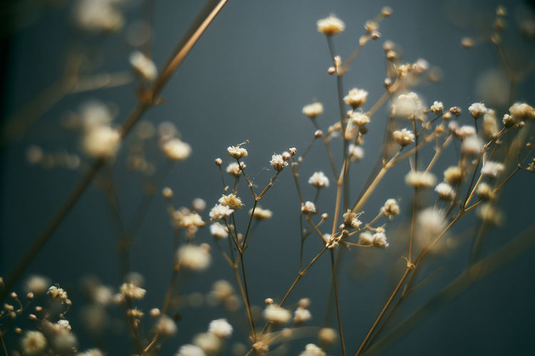 Dry flower Plant Growth Beauty In Nature Close-up Selective Focus Flower Vulnerability  Fragility Tranquility Focus On Foreground Flowering Plant Nature No People Freshness Day Plant Stem Outdoors Sunlight Sky White Color First Eyeem Photo