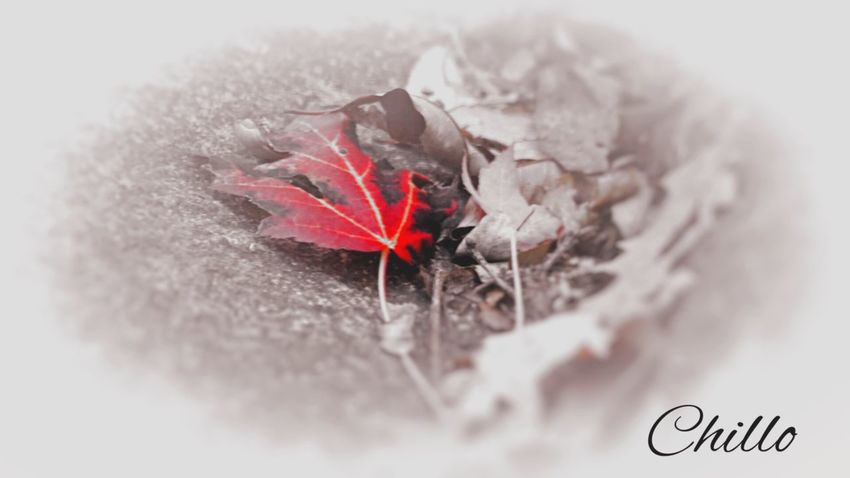 Playing around with filters. Playing With Filters Filter Photography Red Sony A6000 Autumn Color Light And Shadow Nature Leaves