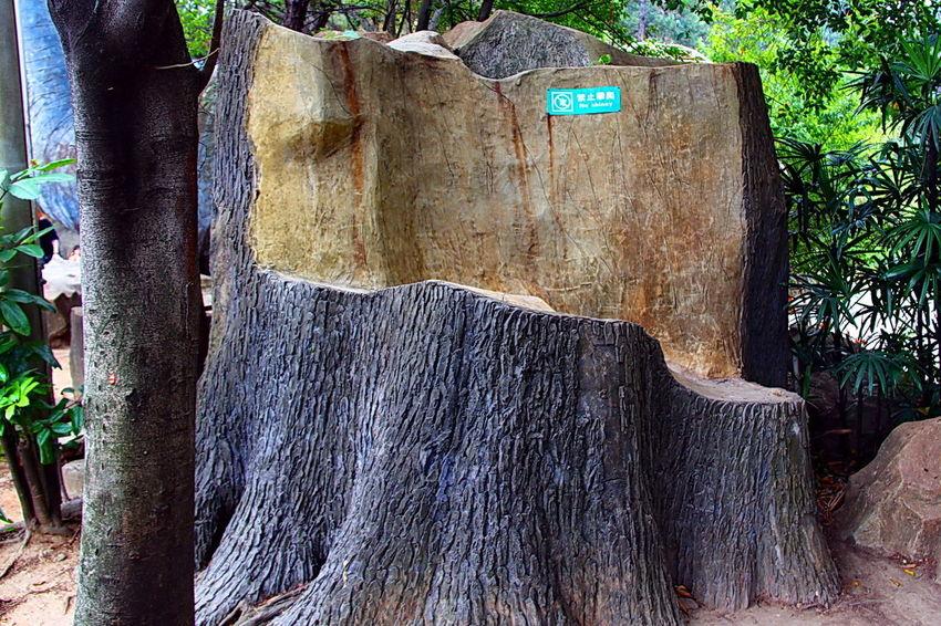 Indicators Log Notices Sign Signage Tree Log Tree Trunks Wood - Material