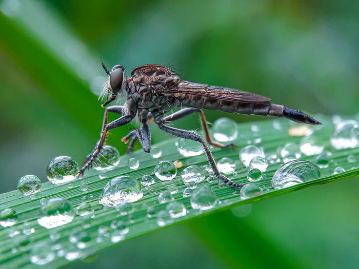 Close-up of insect on wet leaf