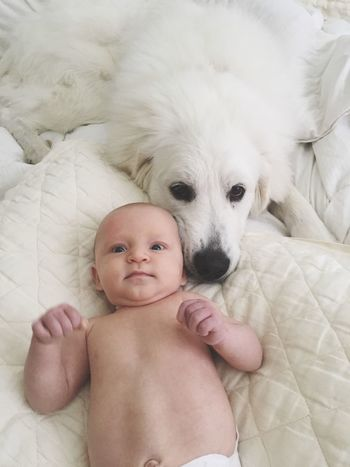 Best buds Baby Cute Looking At Camera Portrait Indoors  Pets Childhood Domestic Animals Dog Dog And Baby Lying Down Babyhood One Animal Innocence Real People Animal Themes One Person