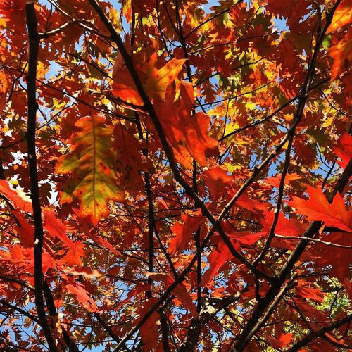 Осень Autumn Tree Change Branch Beauty In Nature Low Angle View Nature Plant Part