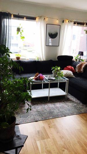 Plant Window Home Interior Indoors  Flooring Furniture Sofa
