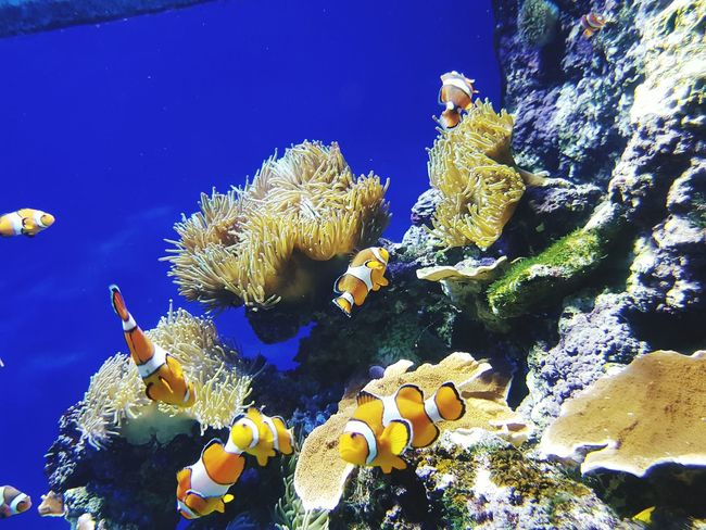 First Eyeem Photo Sea Aquarium Findingnemo clownfish