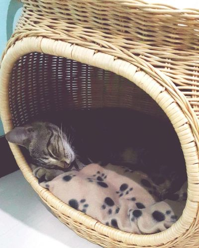 sleepy kitty warm kitty Cat Pets Sleeping Cat Peaceful Home Sweet Home Cute Pets Basket High Angle View Close-up Domestic Cat Domestic Animals Pet Bed