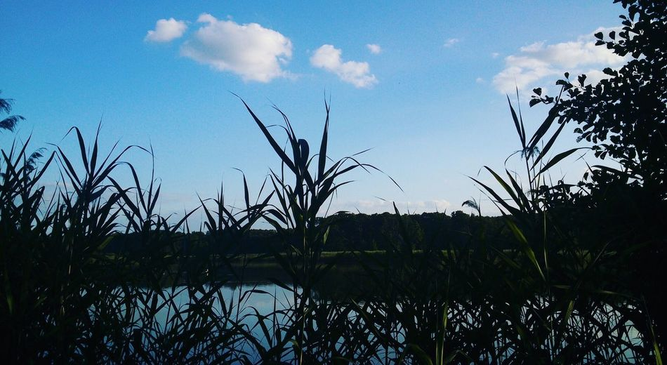 Tranquility Nature Sky Plant Water Marsh Day Beauty In Nature Camping Somogy Forest