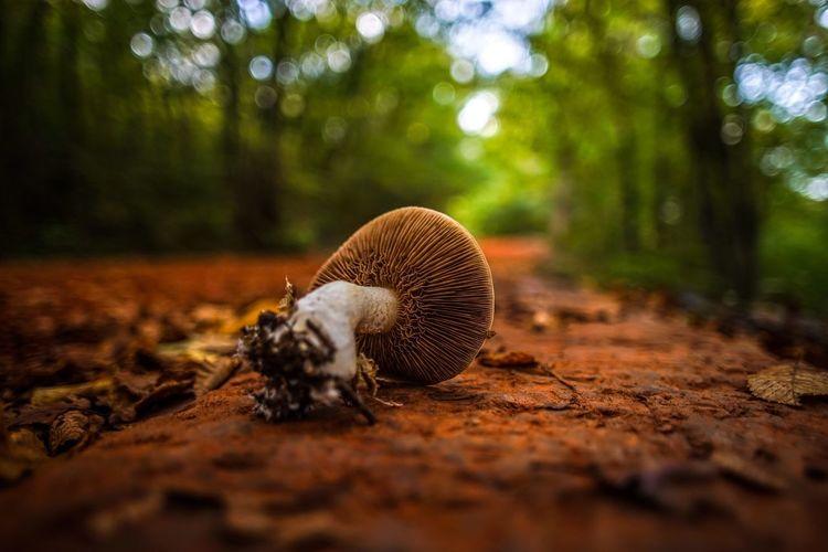 Mushroom Mushrooms EyeEm Nature Lover Nature