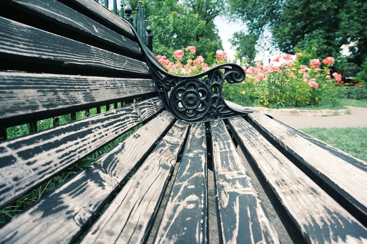 We'll rest on the tummy of a bench. In plain light. Park Sony A6000 Relaxing Happy Tranquility Nature On Your Doorstep Getting Inspired Open Edit The Week Of Eyeem Love EyeEm Best Shots EyeEm Best Shots - Nature Bench Wood Perspective Outdoors EyeEm Nature Lover From My Point Of View Rest & Relax The Essence Of Summer