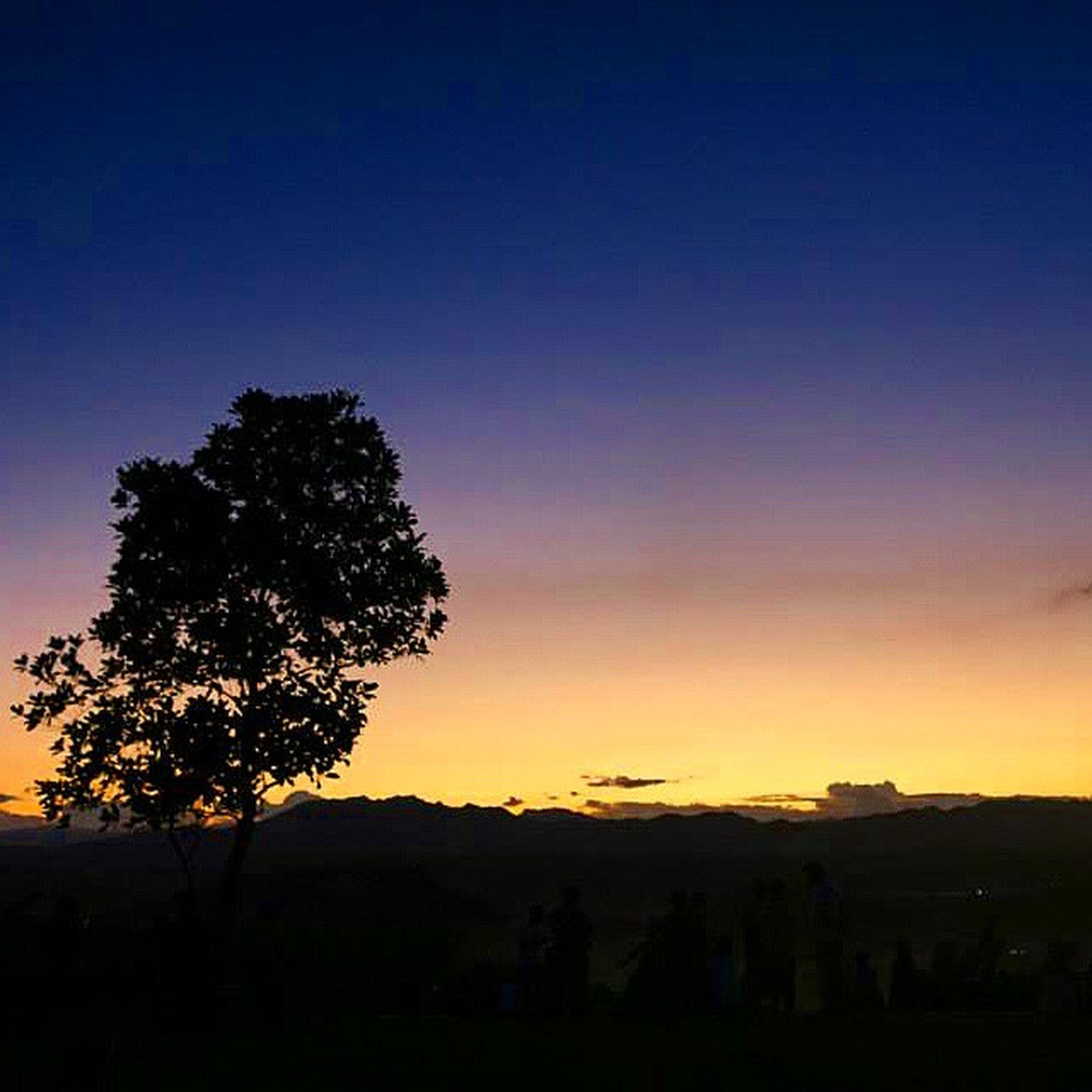 silhouette, sunset, tranquil scene, scenics, beauty in nature, tranquility, tree, copy space, sky, landscape, nature, orange color, blue, idyllic, dusk, dark, outdoors, clear sky, outline, no people