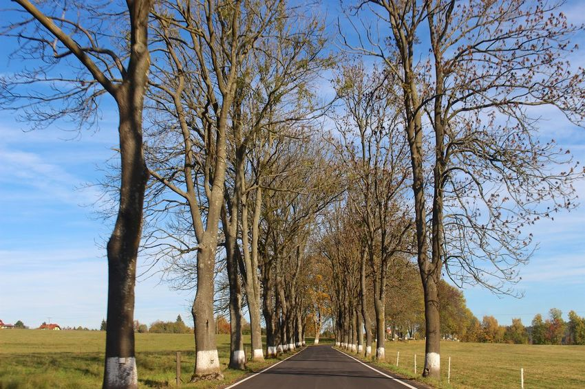 The road ahead is empty Autumn Blue Sky Diminishing Perspective Empty Fall Low Angle View Outdoors Perspective The Road Ahead The Way Forward Tranquility Travel Traveling Tree Trees Vanishing Point