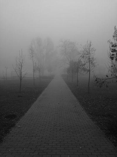 Dark Fog Tree Foggy Weather Nature No People First Eyeem Photo Nature City Life Huawei P9 Lite Sky