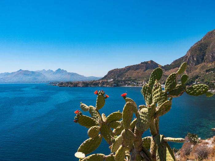 Cactus by sea against sky
