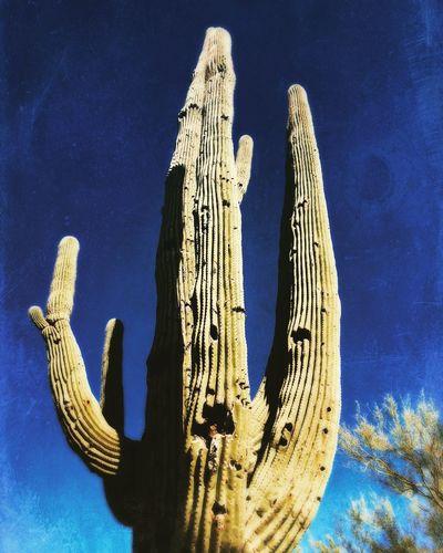 #arizona Saguaro Cactus Outdoors Sky Nature