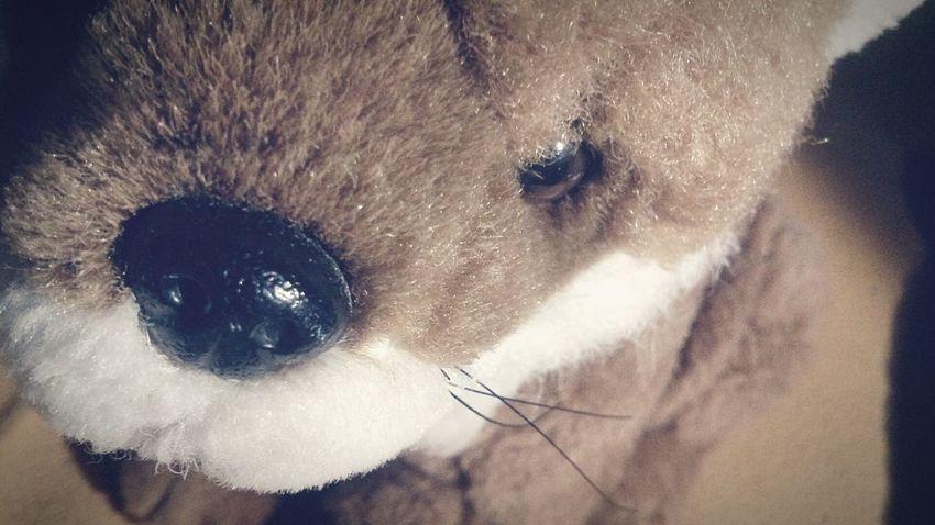 I love it :)❤ ~ Stuffed Animal Filter Sweet Animal Random Bad Quality Creative Love