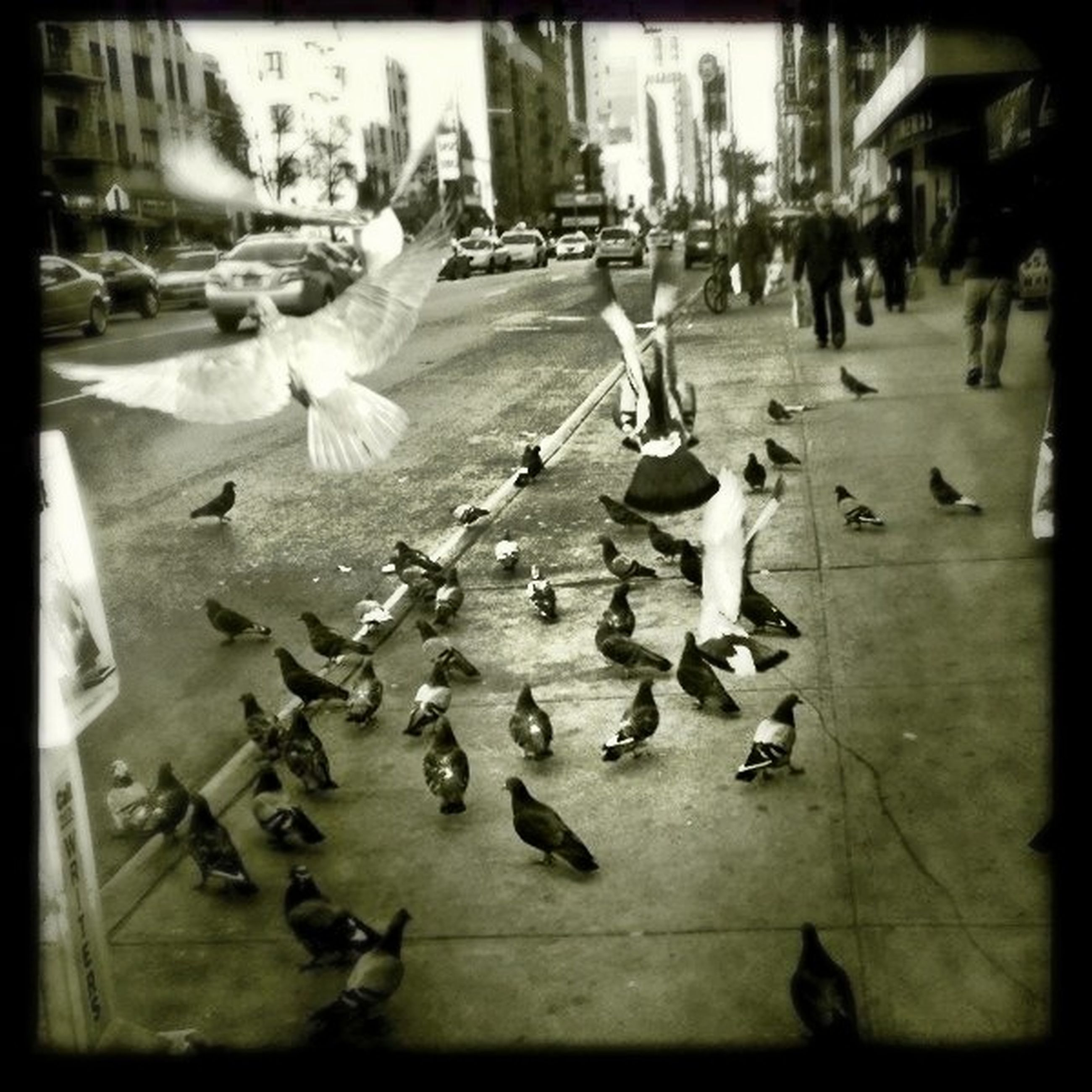 transfer print, bird, auto post production filter, large group of people, wildlife, city, animal themes, animals in the wild, city life, building exterior, street, built structure, pigeon, architecture, flying, person, flock of birds, high angle view