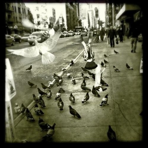 #nyc #pigeons