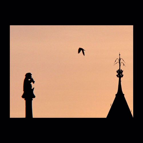Amboise Bird Silhouette The Calmness Within