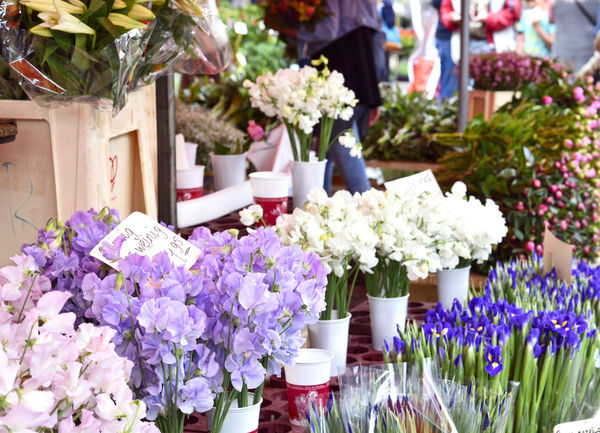 flower market stall with flower bouquets and bunches. Flower Market Sale Street Market Arrangement Arrangements Beauty In Nature Bouquet Bouquet Of Flowers Buying Close-up Flower Flower Bouquet  Flower Bunch Flower Bunches Flower Head Flowering Plant Flowers Fragility Freshness Market Stall Plant Retail  Stall Variation Vulnerability