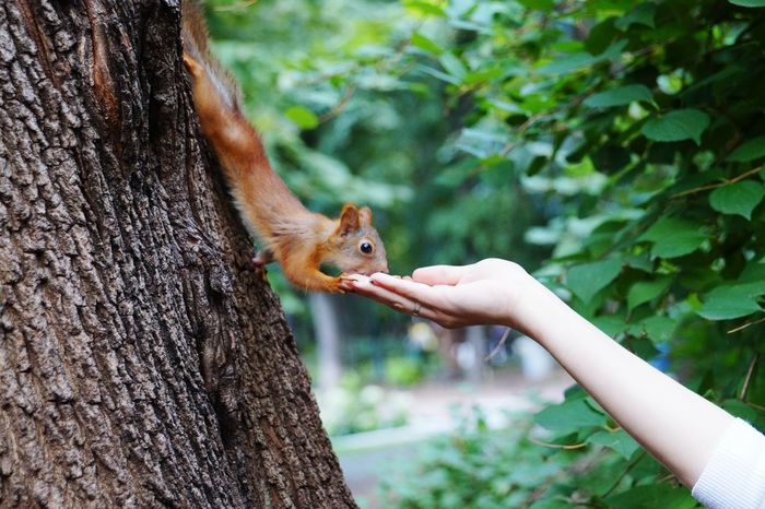 Summer Views Gorky Park Beautiful Nature Beautiful View Squirrel Bon Appétit! Nuts Food Porn Awards