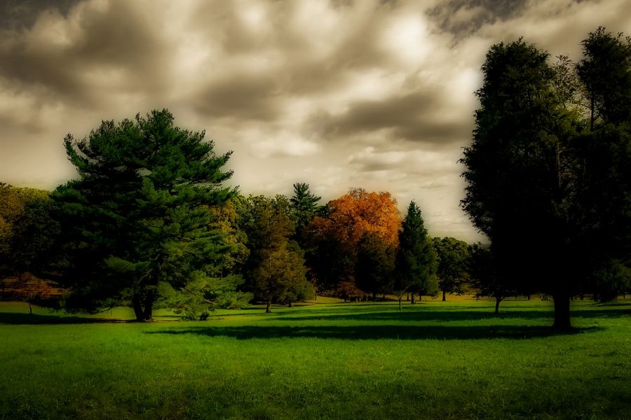 November Day @ Valley Forge showing off Autumn colors. Beauty In Nature Cloud - Sky Day Dramatic Sky Golf Course Grass Green Color Growth Landscape Nature No People Orton Effect Outdoors Sky Tree