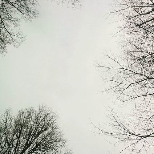 . . . . . Wintertrees Wintersky BareTrees Kingston_on Nature Trees Walkinnature Minimalist Treebranches Treestagram