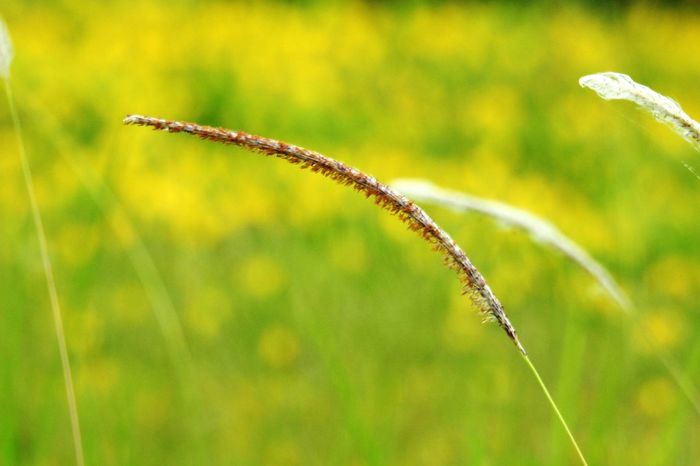 Focus On Foreground Plant Growth Nature No People Beauty In Nature Close-up