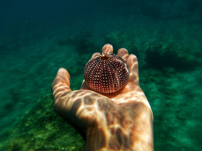 Cropped hand of person holding urchin in sea