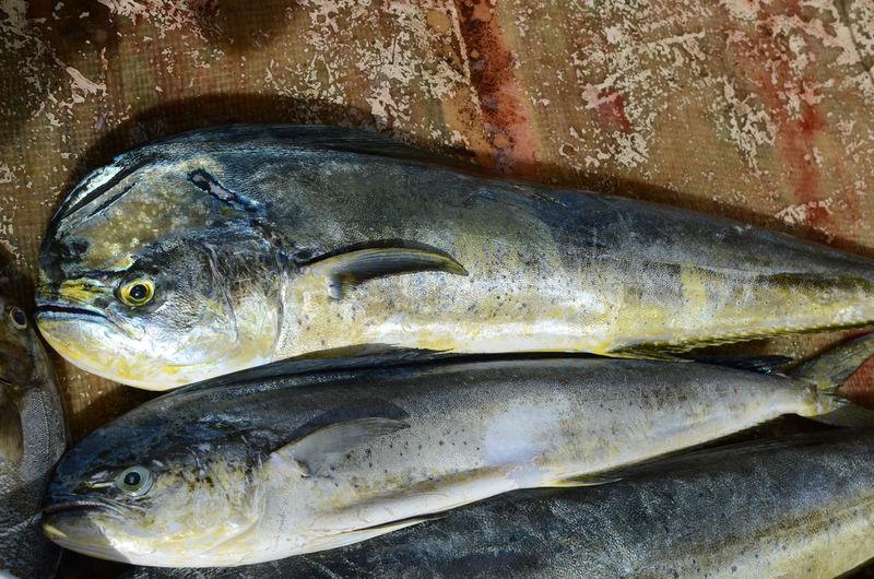 Close-up of fish