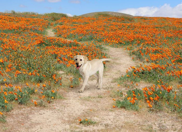 View of a dog standing against plants