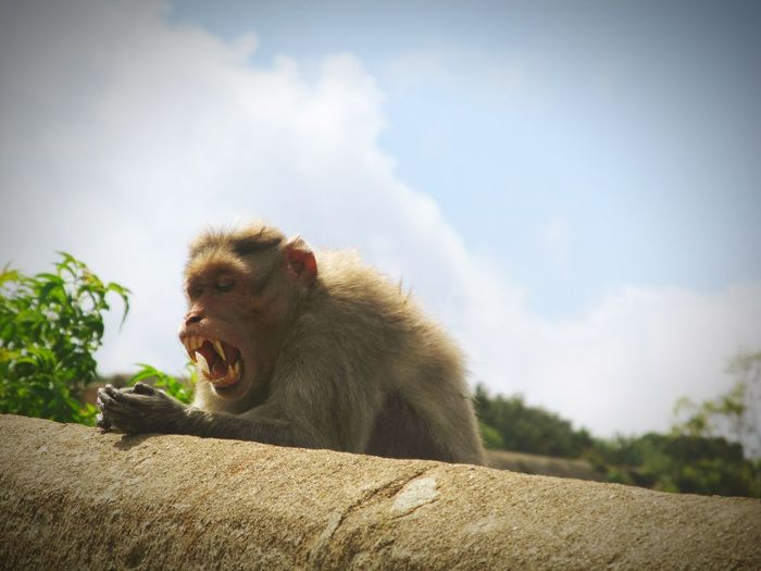 Monkey on retaining wall against sky