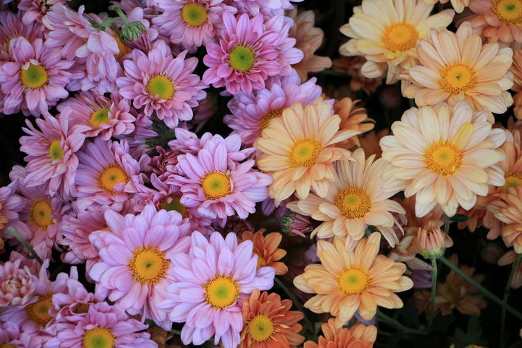 sweet lovely tiny pink and orage flowers Flowering Plant Flower Plant Freshness Vulnerability  Fragility Petal Beauty In Nature Flower Head Inflorescence Close-up Yellow Nature No People High Angle View Growth Abundance Backgrounds Full Frame Outdoors Pollen Bunch Of Flowers Flower Arrangement Bouquet