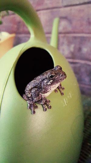 Frog Tree Frog Garden Arkansas S6edgephotography