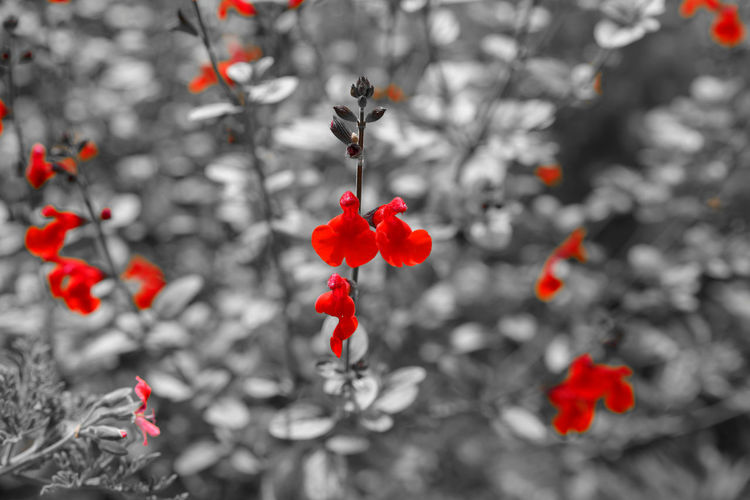 Jardin Floral de Paris - Red is Red Beauty In Nature Black Close-up Day Focus On Foreground Freshness Fruit Garden Growth Isolated Color Jardin Jardin Floral De Paris Moth4fok Nature No People Outdoors Parc Parc Floral Paris Park Plant Plante Red Rose Hip Vegetation Sommergefühle EyeEm Selects