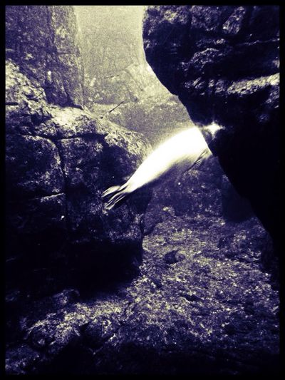Seal Zoo IPhoneography Sealife