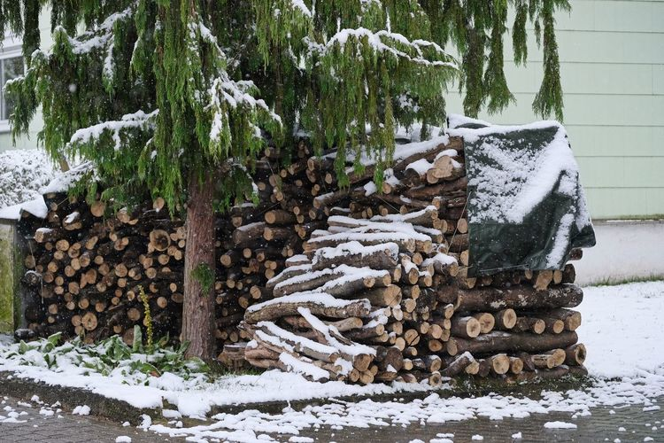 Brennholz Stapel Kaminholz Schneetreiben Winter Cold Temperature Day Deforestation Firewood Forestry Industry Heap Kalt Large Group Of Objects Log Lumber Industry Nature No People Outdoors Pile Snow Stack Timber Tree Winter Wood - Material Woodpile