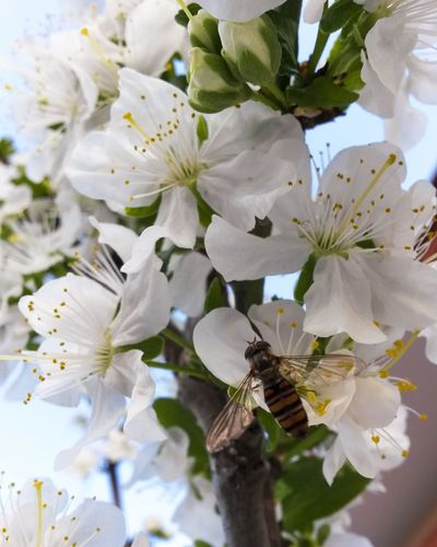 Bee Natureporn Nature Photography Mothernature Petal Growth Nature Flower Beauty In Nature Tree Springtime Branch Blossom Leaf No People Freshness Plant Close-up Outdoors Day Fragility Flower Head