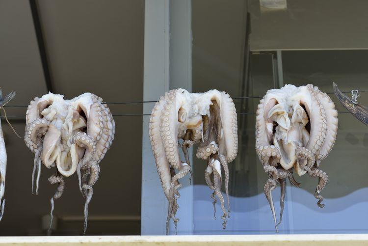 Close-up of animal skull in museum